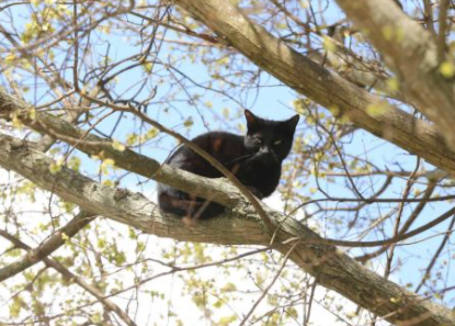 A small black cat stuck in a tree