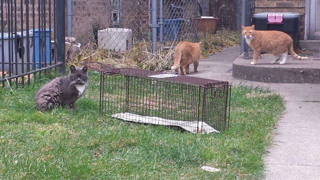 A group of cats surrounding a cat trap in a backyard
