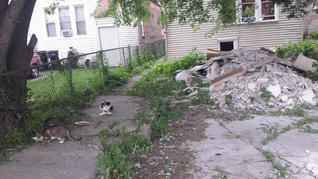 Feral cats being fed in a backyard