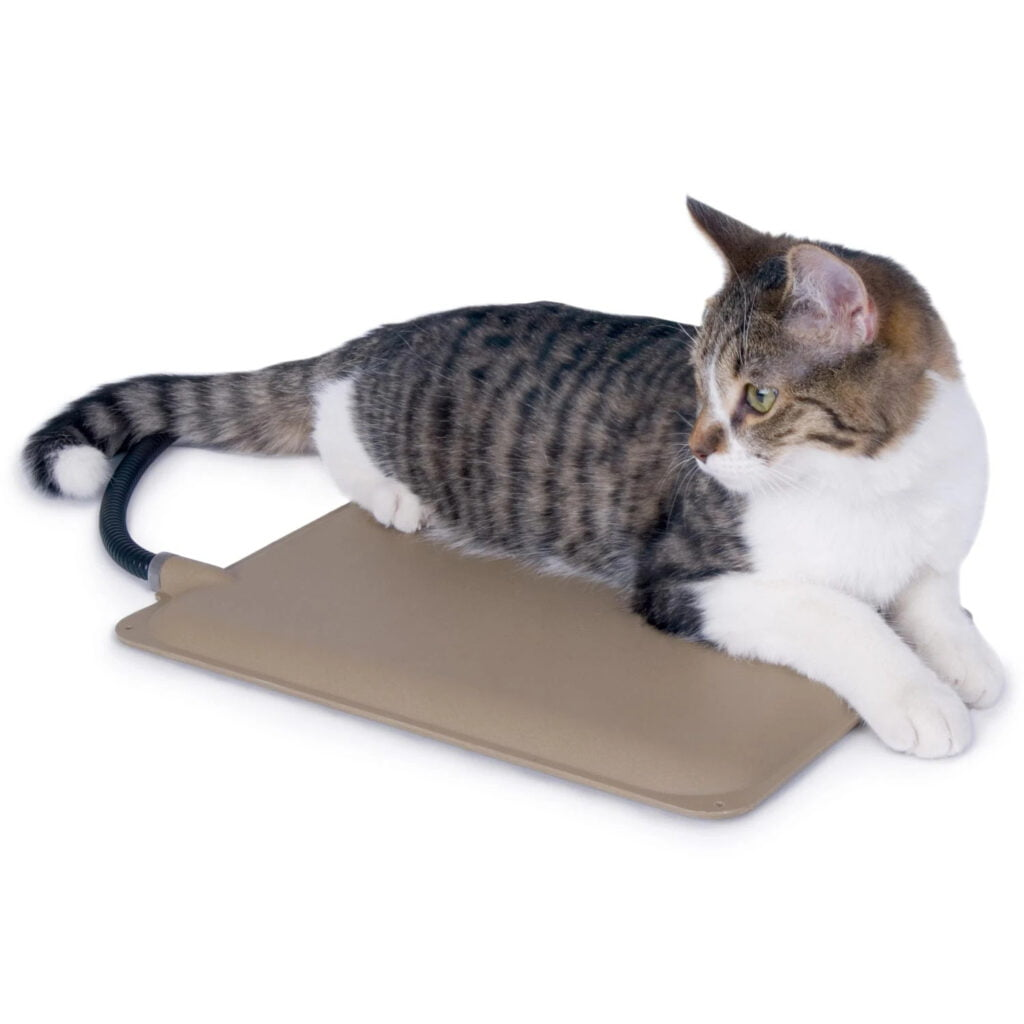 An outdoor heating pad plugged in and heating a stray cat