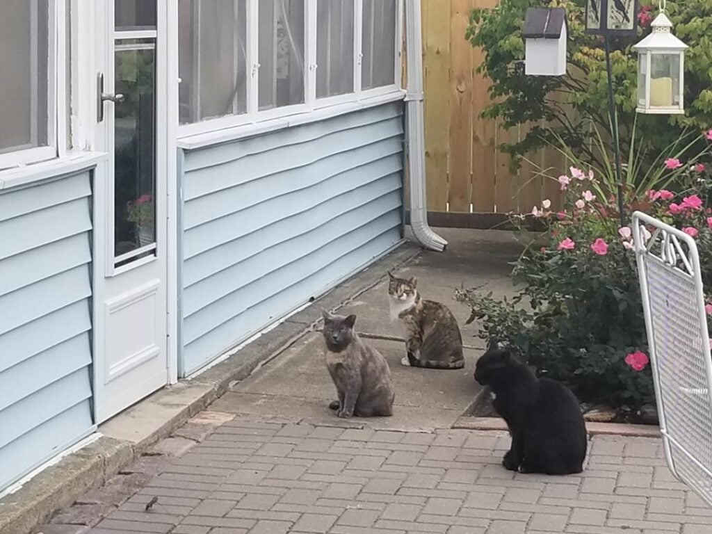 A group of cats outside of someone's home looking for food