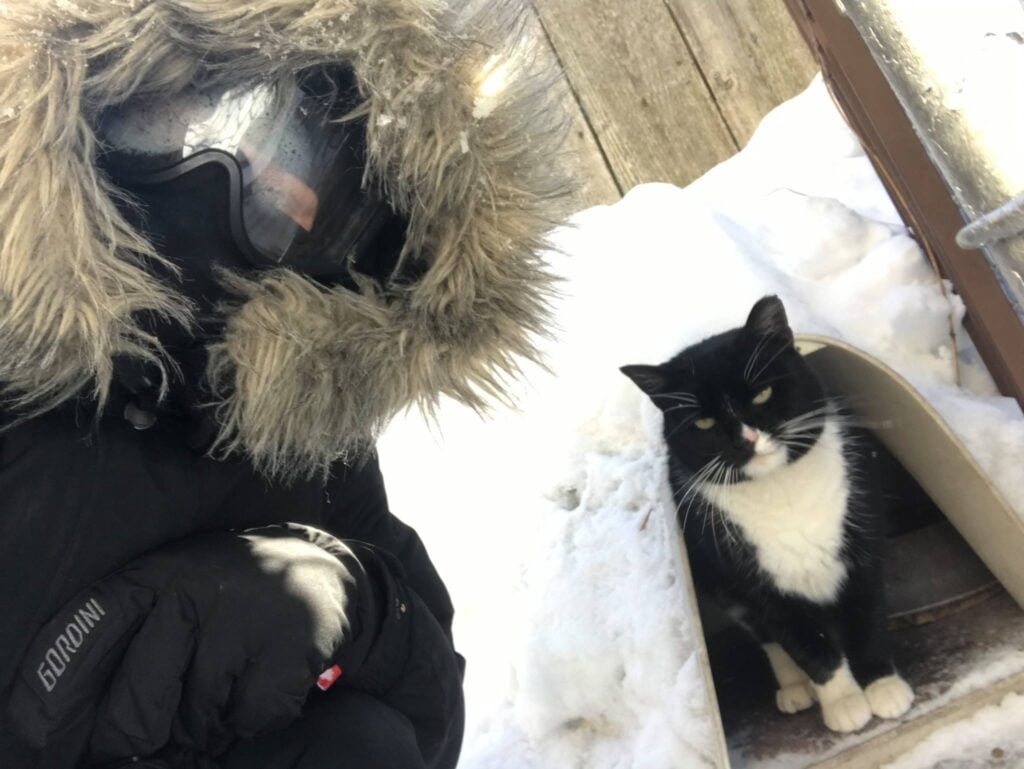 A feral cat taking shelter from winter snow in an outdoor shelter
