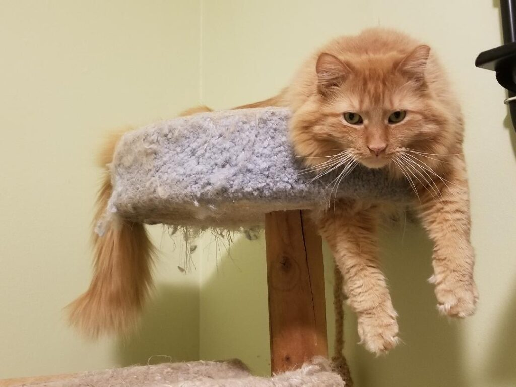A tan cat lying on a cat tower in a home
