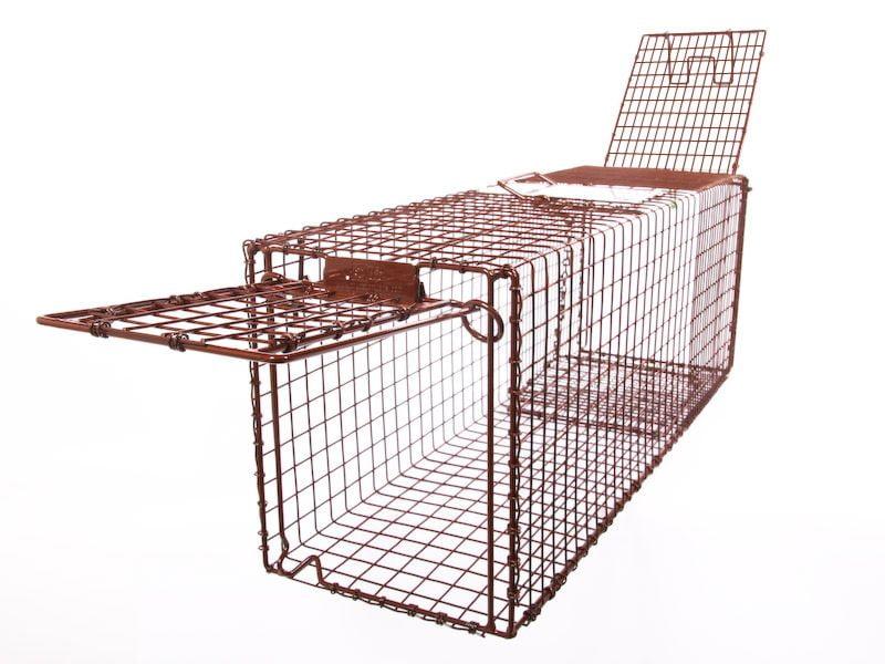 An open cat trap