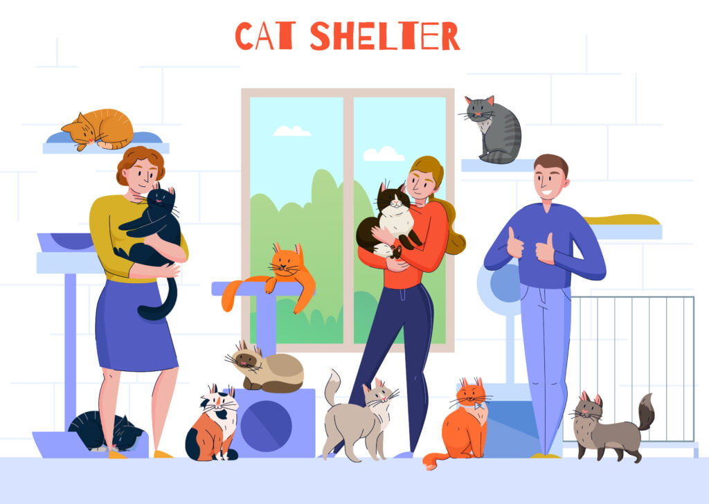 Cat shelter graphic