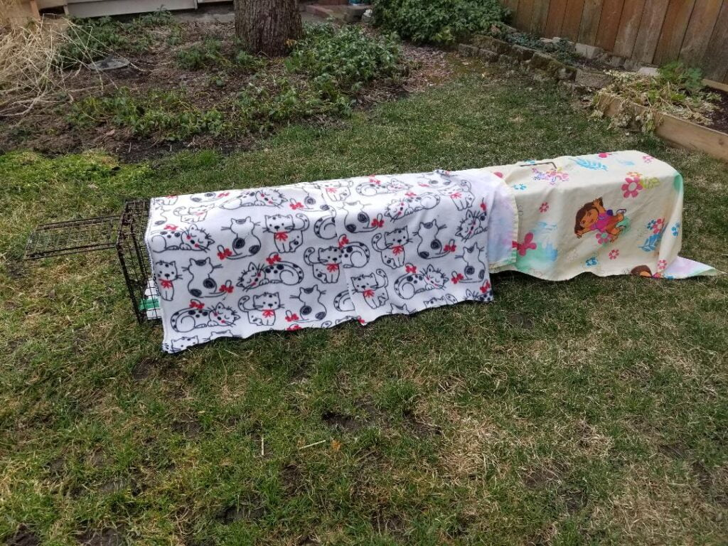Stray cat cages outside covered with blankets