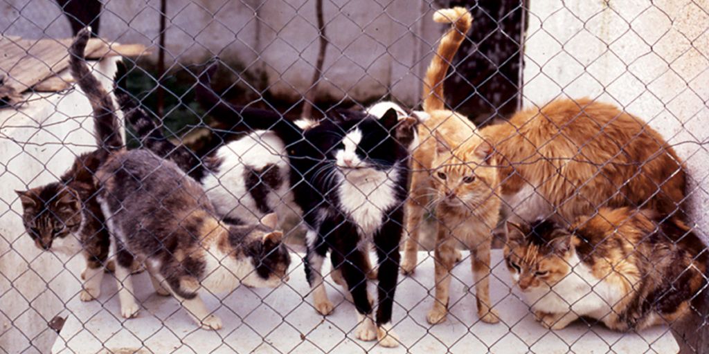 A group of cats behind a fence in a shelter