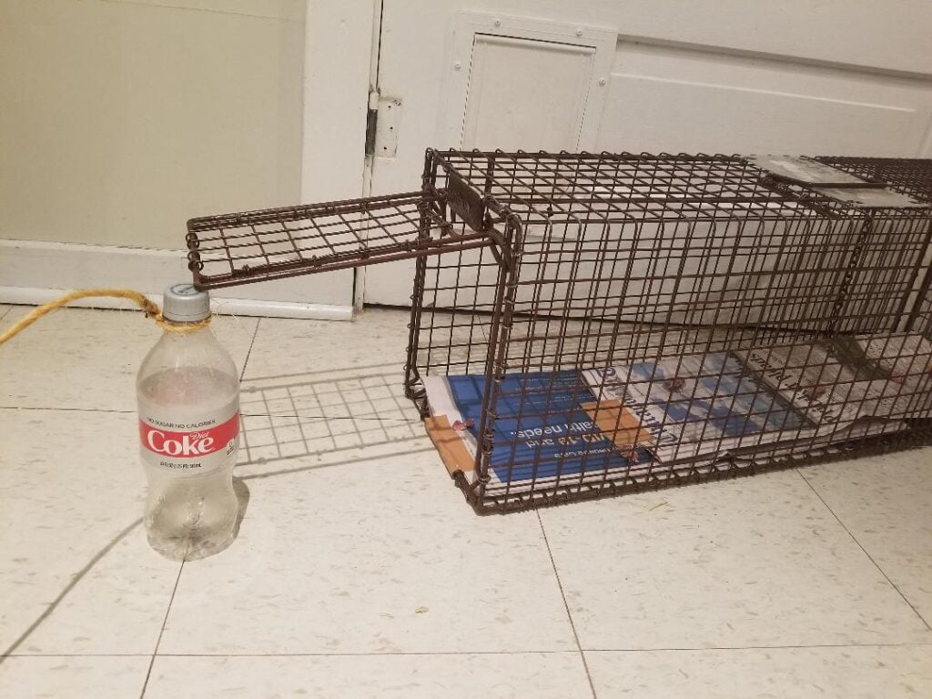 Open cat cage indoors with plastic bottle