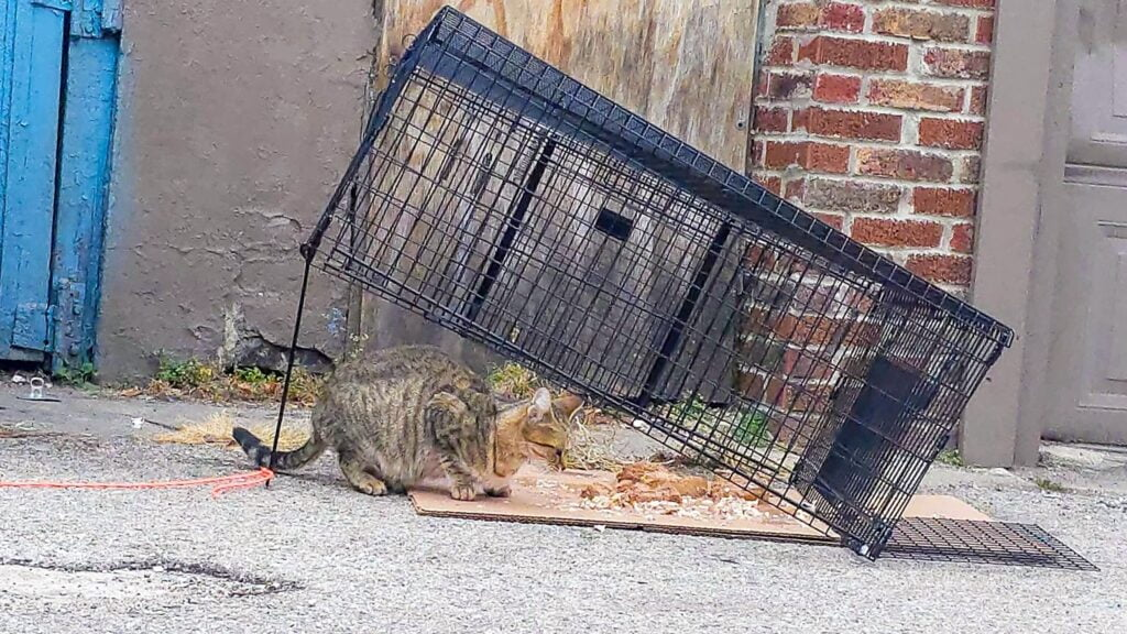 A cat trap set outside for stray cats