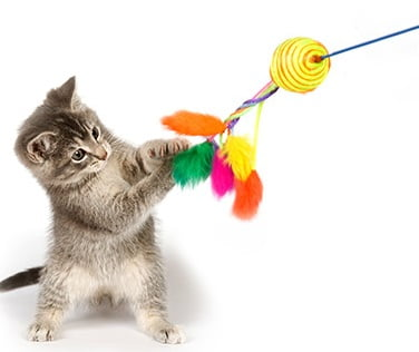 Kitten playing with a feathery toy